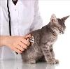 Ветеринарные клиники в Полярных Зорях